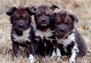 African Wild Dog pups - photo by Dr. Jennifer D'Agostino