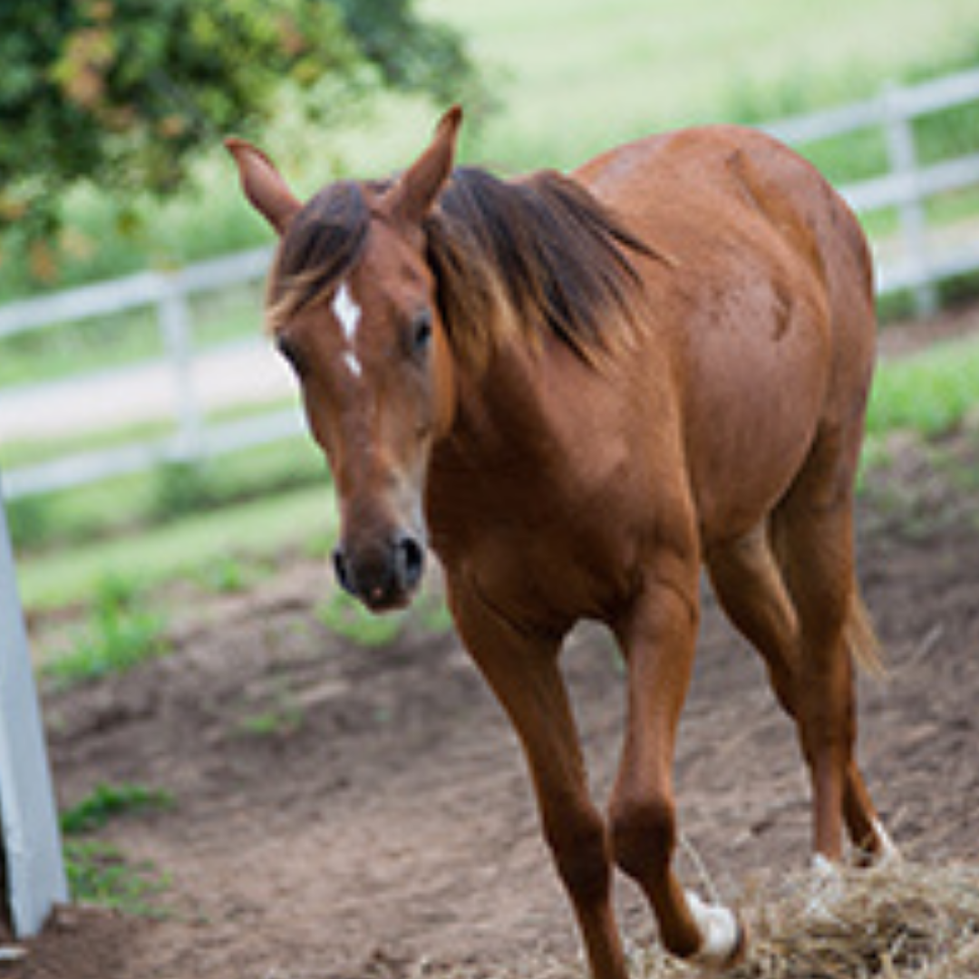 THUMB_FEAT_HorseFeathers_Prancing_0913