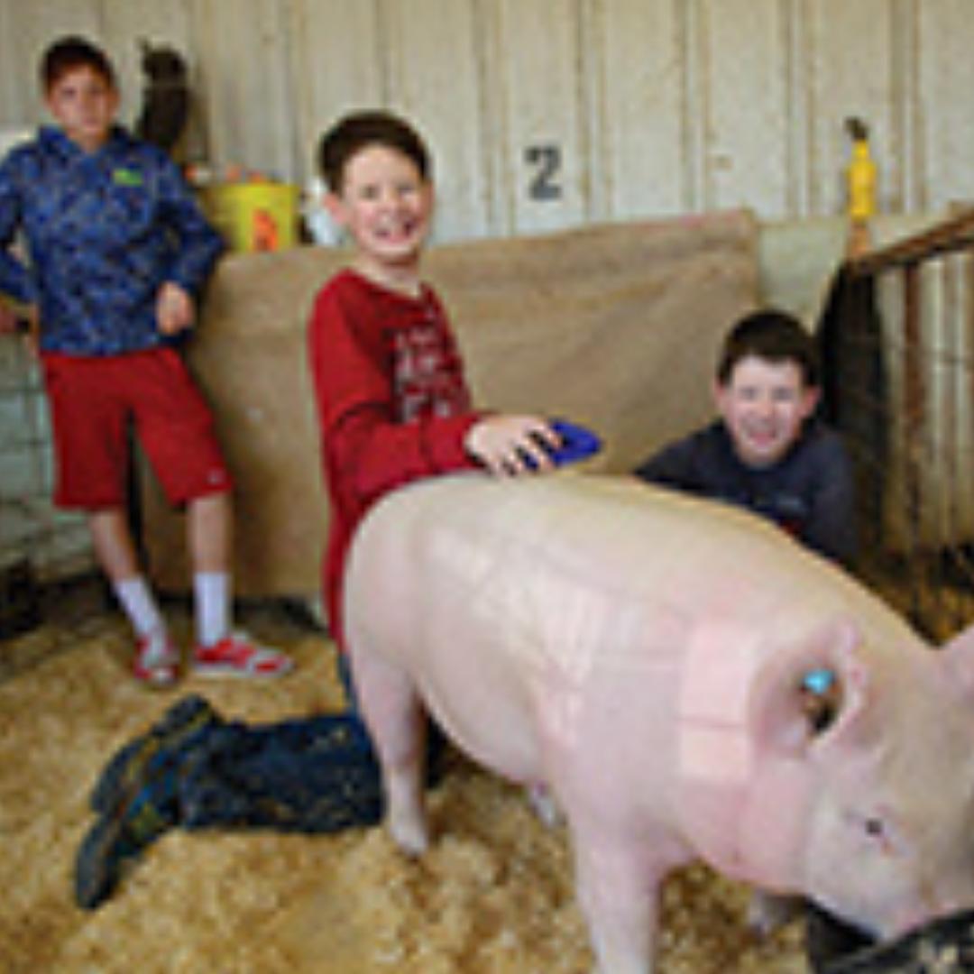 thumb_FEAT_PigsKids_triplets_0514