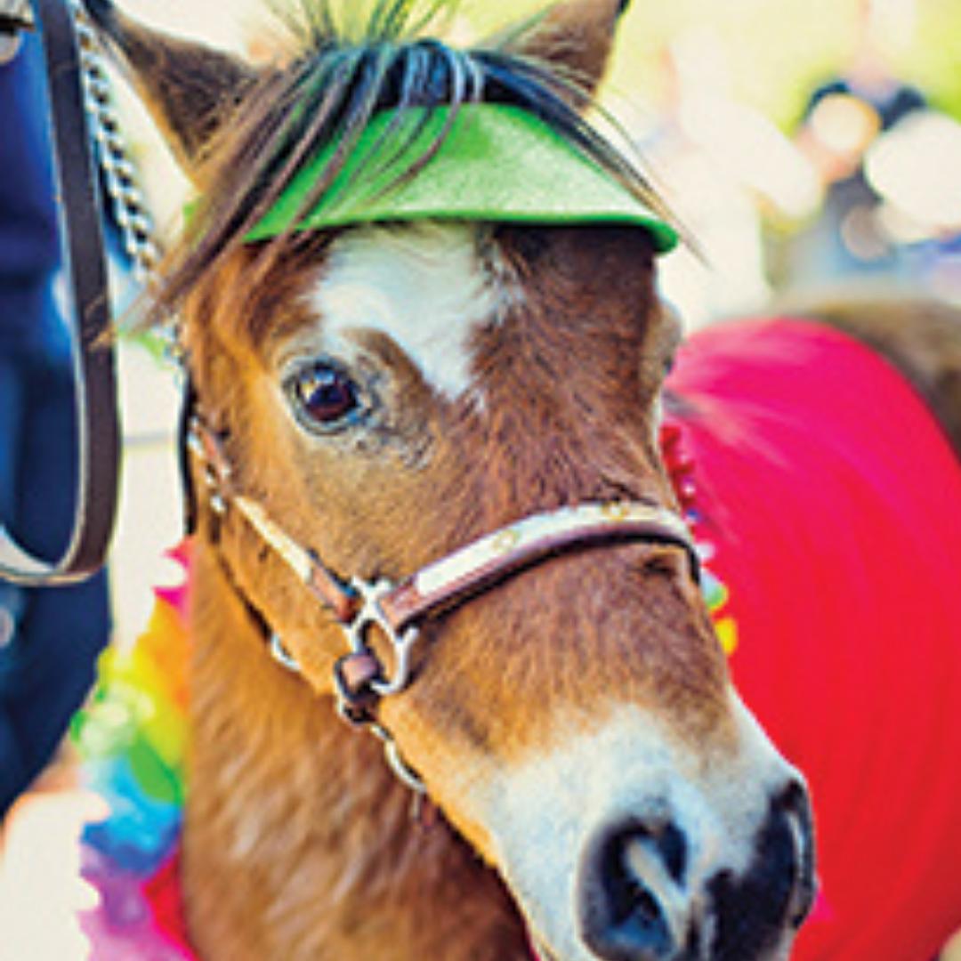 thumb_FEAT_FunFest_horse_1014