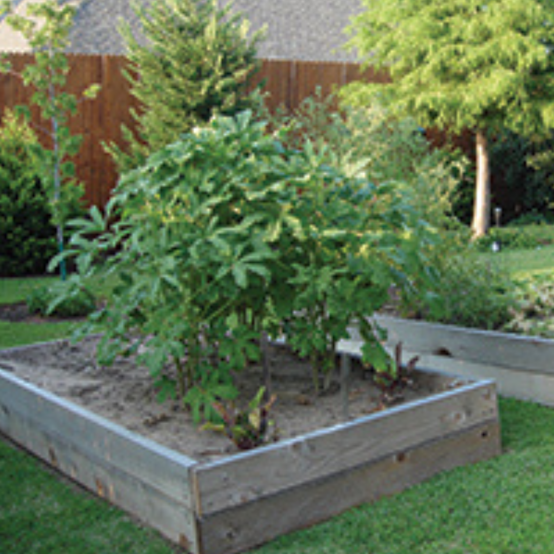 thumb_FOOD_Veggie_Garden_garden_0915