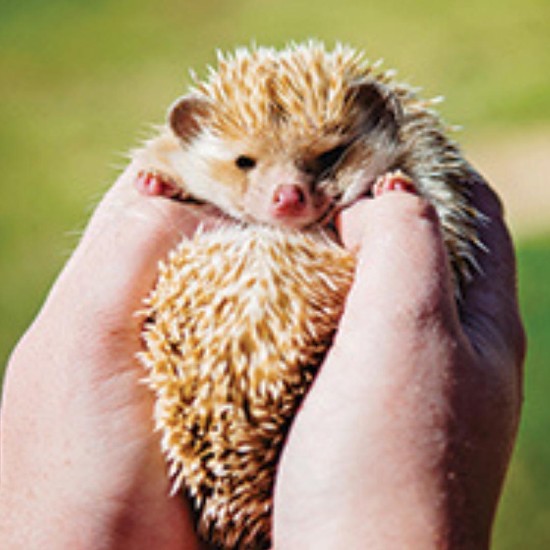 Hug a Hedgehog